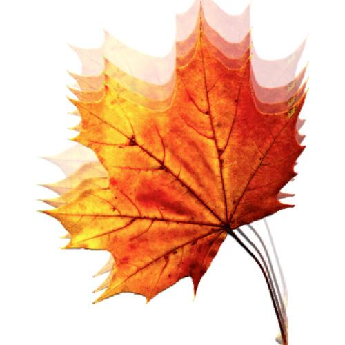 Autumn's Past's avatar