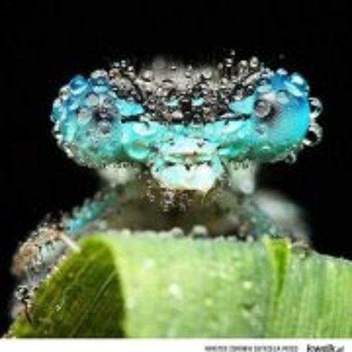Azul Amarillo's avatar