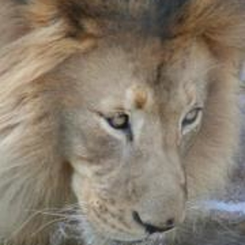 Savadra Speaks's avatar