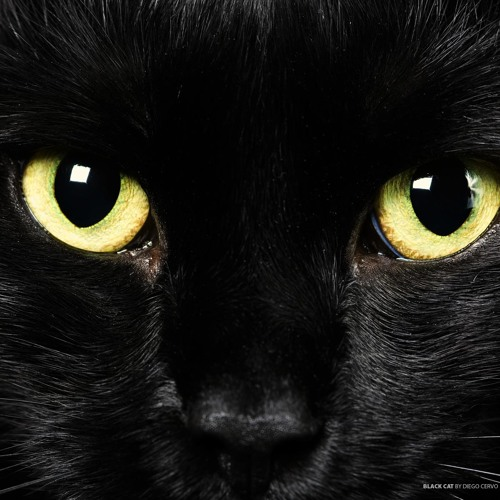 mickeycat's avatar