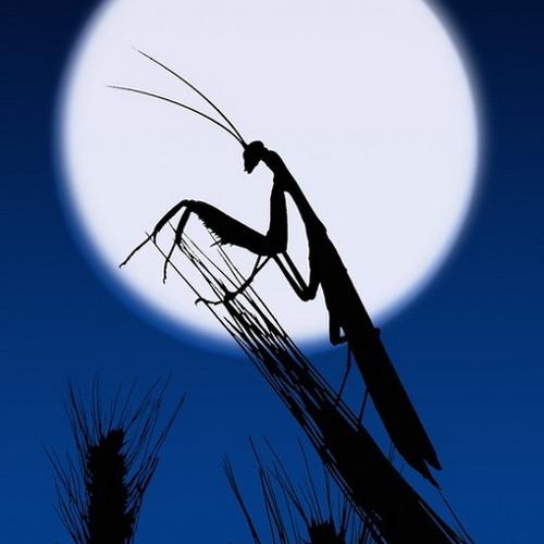 笛在月明楼hc's avatar