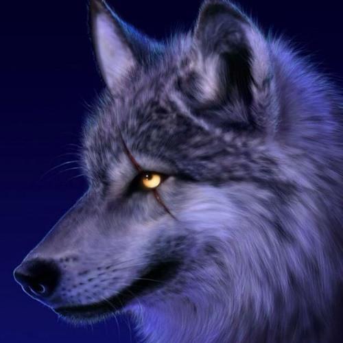 manav24's avatar