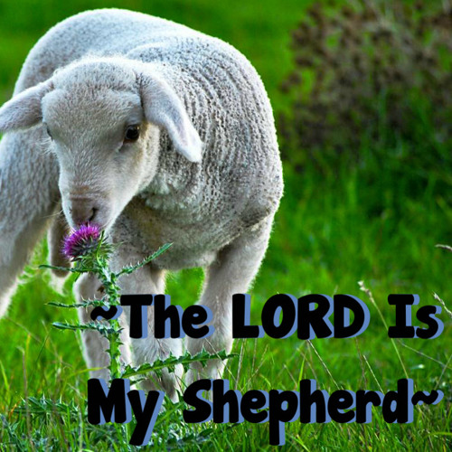 THE LORD IS MY SHEPHERD !'s avatar