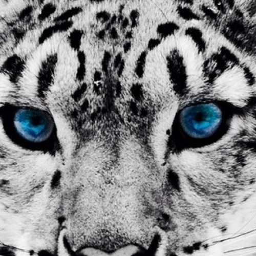 The White Tiger366's avatar