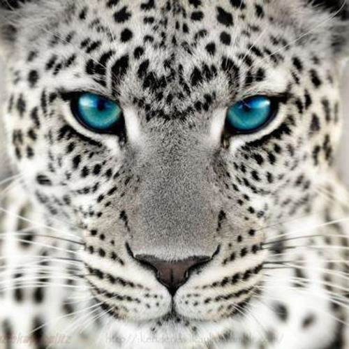Tyroxin's avatar
