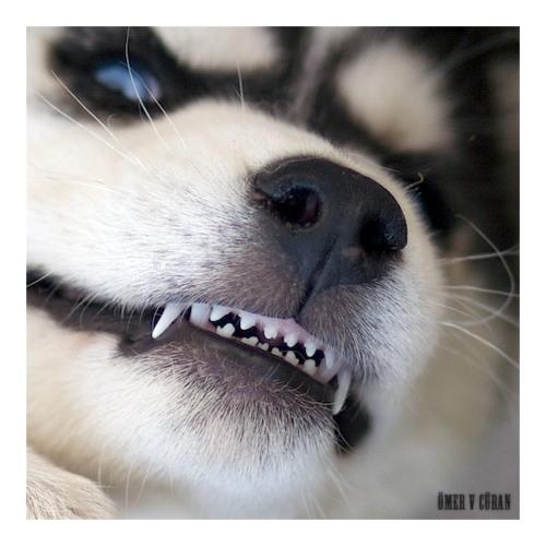 Oneupdawg's avatar