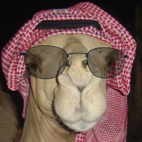 CamelCamelsky's avatar