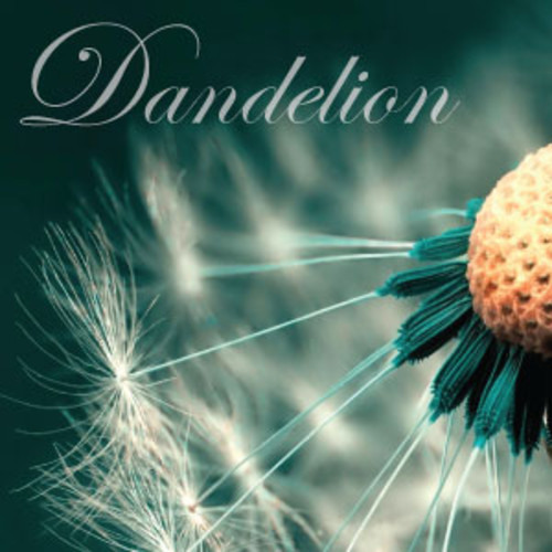 Dandelion X's avatar