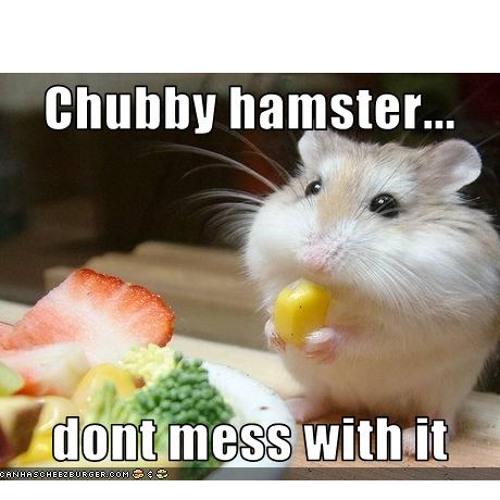 Chubby Hamster's avatar