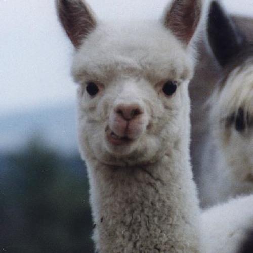 Llamavision's avatar