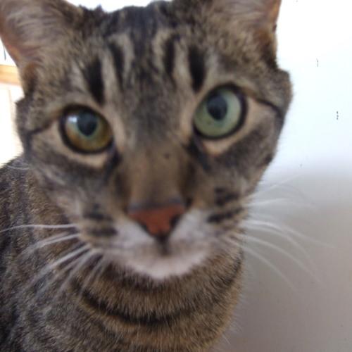 twocats's avatar