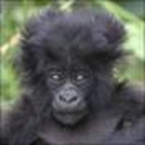 BacksideGorilla's avatar