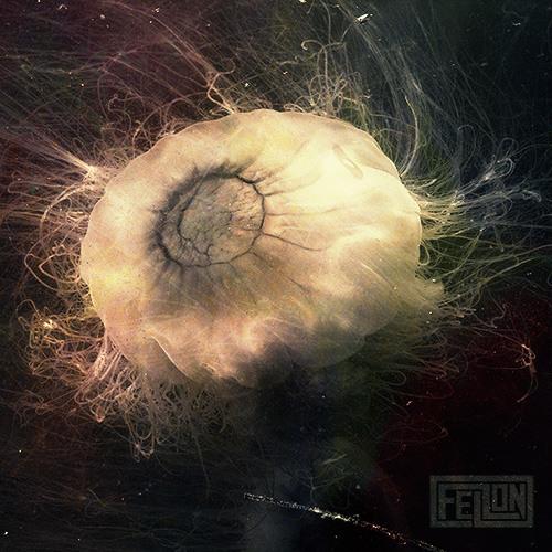 oficialfellon's avatar