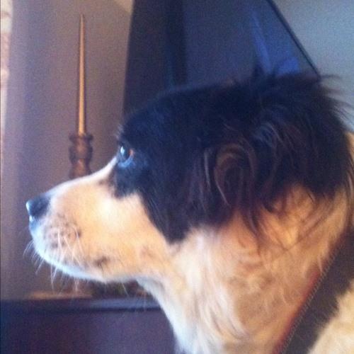 brouhaha's avatar