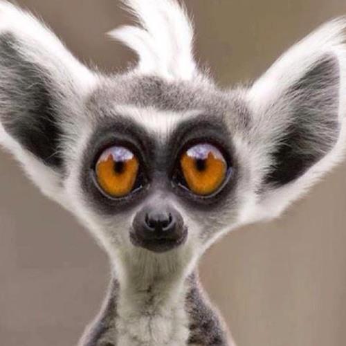 salionyj's avatar