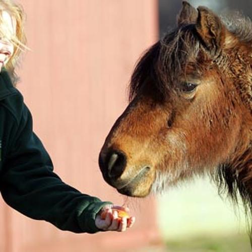 Pit Pony's avatar