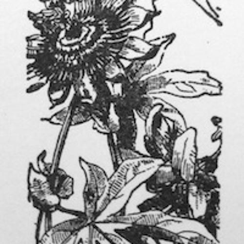 Roses of Sodom's avatar