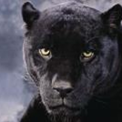 Puma Mark's avatar