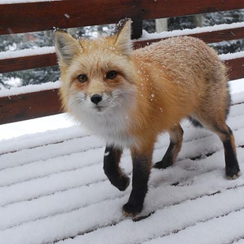 foxgirl12's avatar