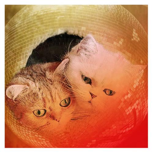 Miau live's avatar