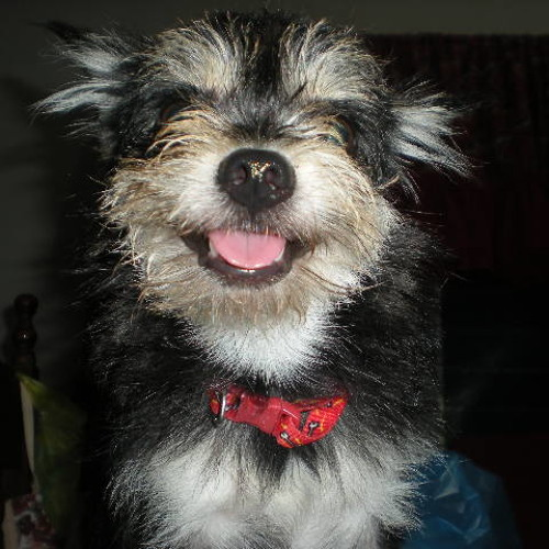 Puddy Isapuppy's avatar