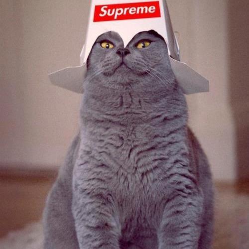 iLOVEkitTEN:3MEWMEW's avatar
