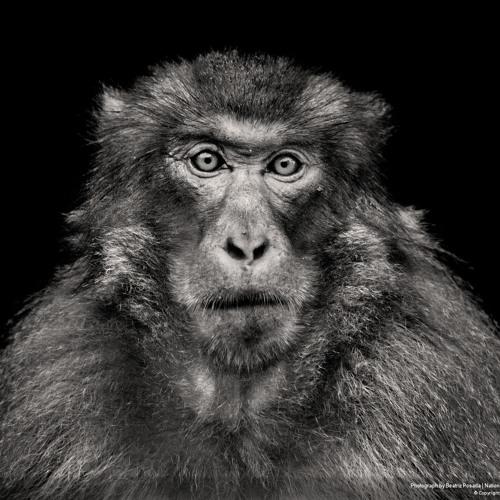a lion's riot's avatar