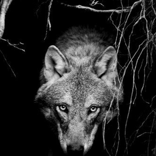 _The_Wolf's avatar