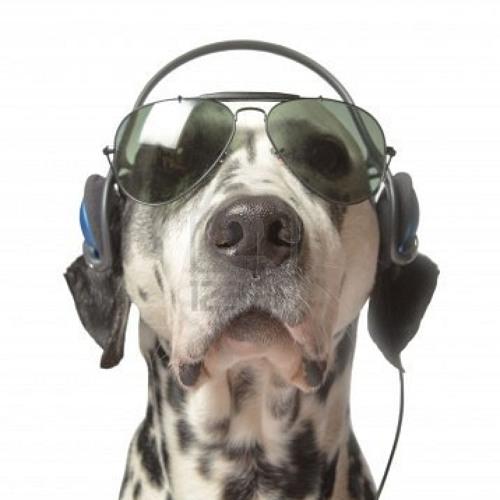 dj walks's avatar