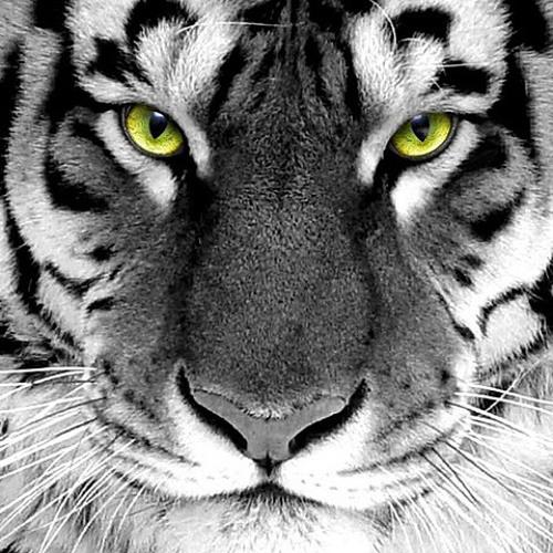 GroupTribe 2's avatar