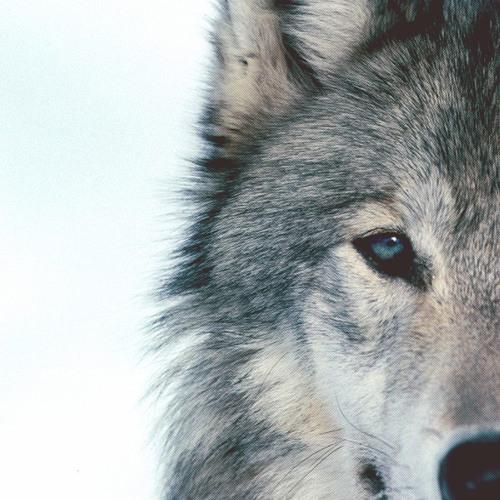 Neo_werewolf's avatar