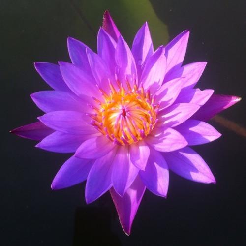 jolergaan's avatar