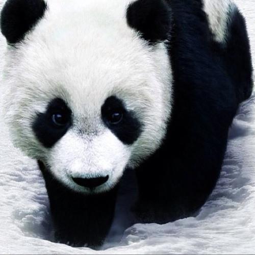 WU-PANDA's avatar