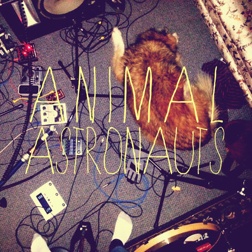 Animal Astronauts's avatar