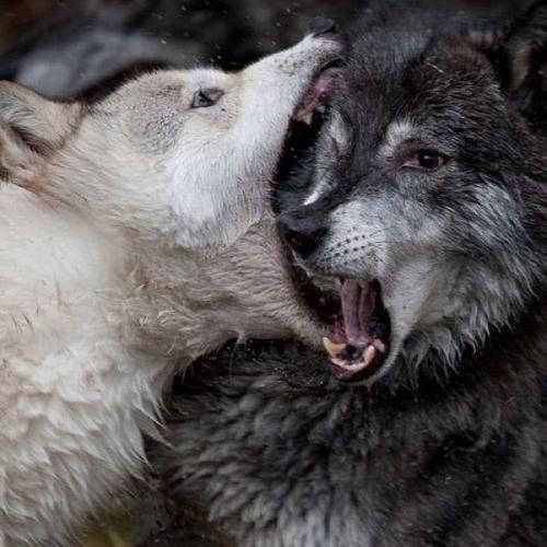 Wolf Teeth Music's avatar