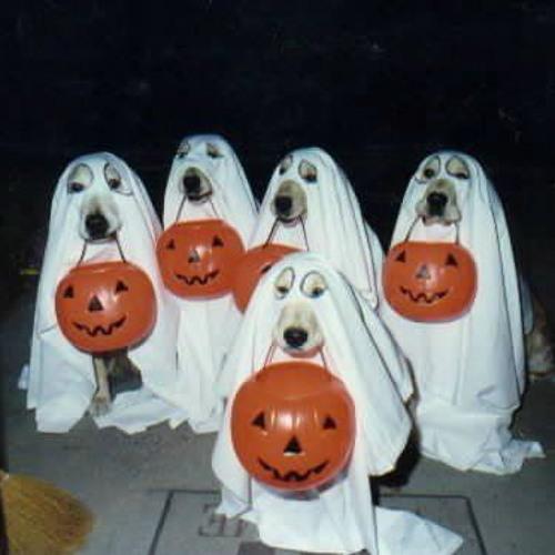 Method Man - Ghostdog How We Do Remix