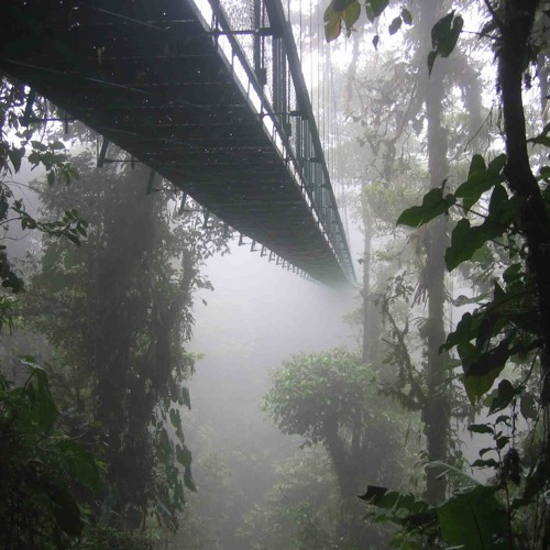 Cloud Forests's avatar