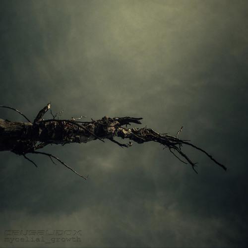 CausaliDox-MycelialGrowth's avatar