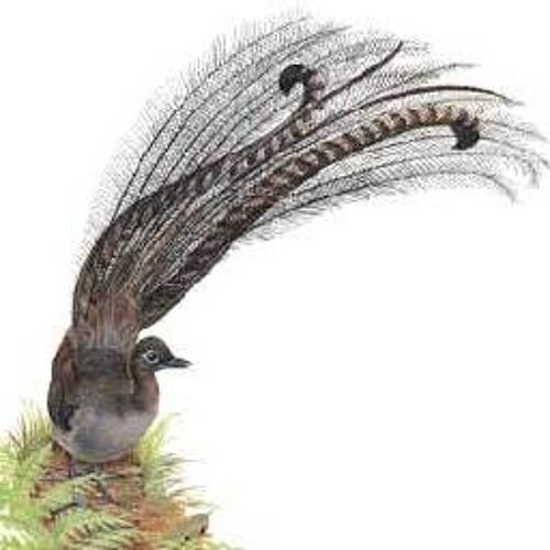 Lyrebird's avatar