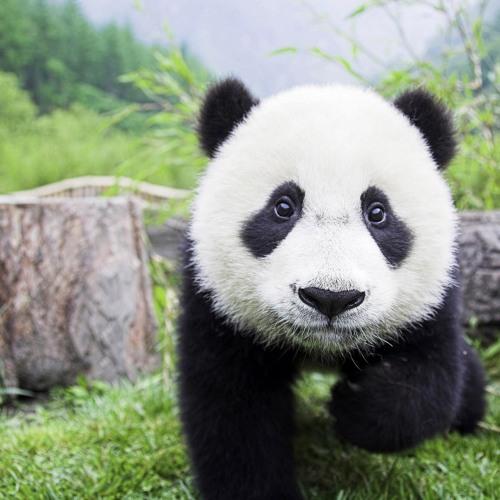 Panditar's avatar