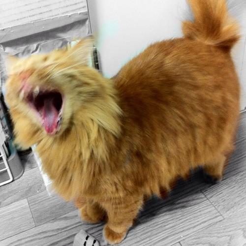 manabuhashimoto's avatar