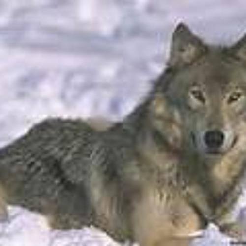 la louve's avatar