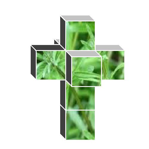 Goosegrass's avatar