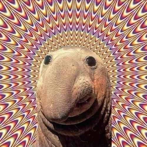 ScottSwings's avatar