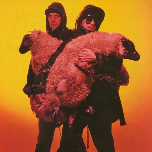 WHY SHEEP?'s avatar