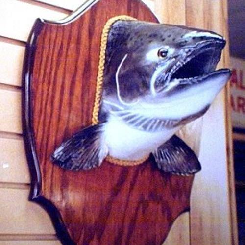 Salmonhead's avatar