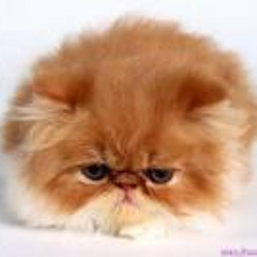 Mèo's avatar