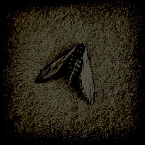 Waxen Wings's avatar