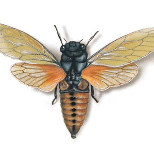 Cicada Rhythm's avatar