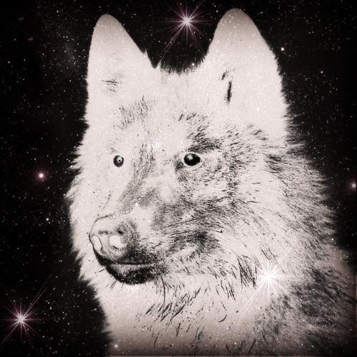 Alex Vidi Vici's avatar